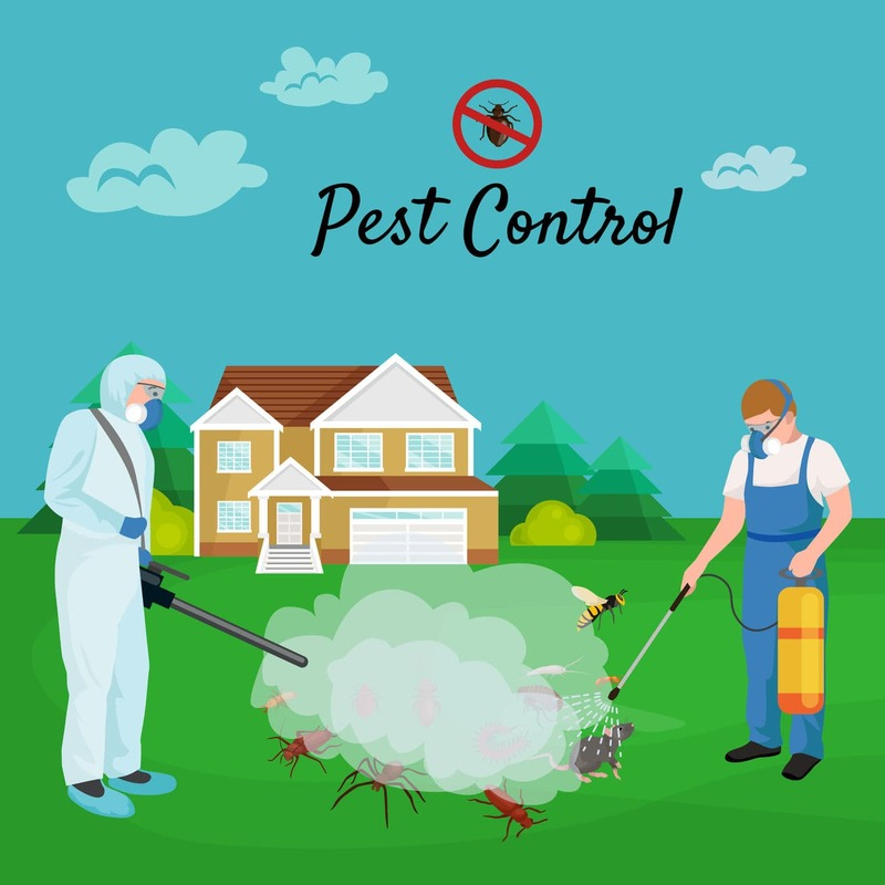 Proffesional and efficient service for all types of pest problems